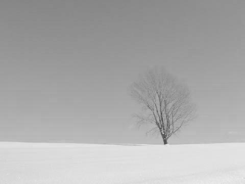 loss_tree_b_w.jpg